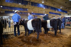 Cover photo for Stay in Touch With NC 4-H Livestock