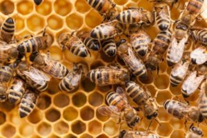 Cover photo for New 4-H Beekeeping Club Meeting CANCELLED