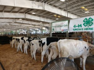 Cover photo for 4-H Beef Club Meeting