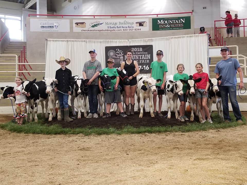Picture of Beef Club members and their dairy calves at the mountain state fair show