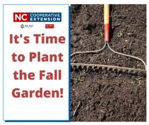 Its Time to Plant the Fall Garden