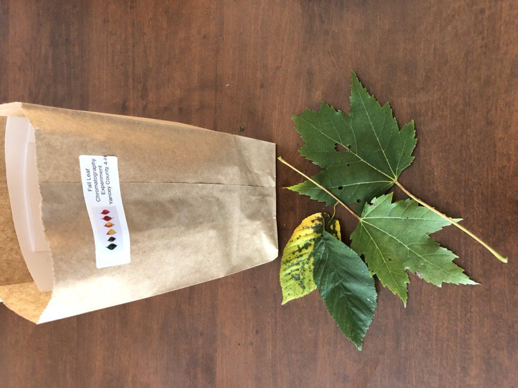 Leaf Chromatography Kit