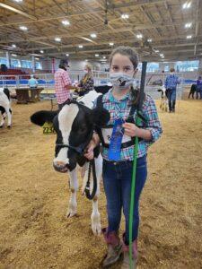 dairy steer