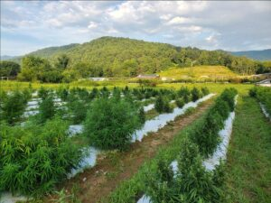 Cover photo for WNC Hemp Growers Meeting-Feb. 17, 2021