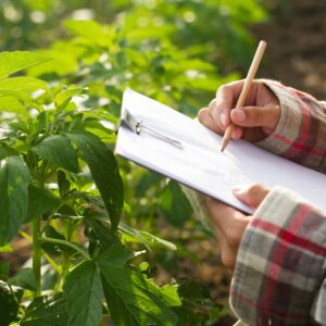 Image of a person holding a clipboard in a field, recording scouting data.