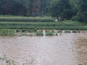 Flooded Vegetable Field